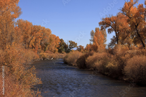 Trees with yellow autumn leaves near stream