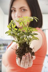 Caucasian woman holding plant in soil