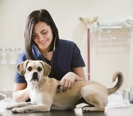 Caucasian veterinarian examining dog