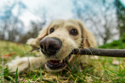Chewing the stick