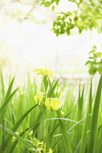 Blooming flowers and grass