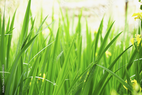 Close up of green grass and flowers