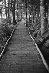 Wooden path through woods