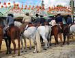 Jinetes a caballo, Feria de Sevilla