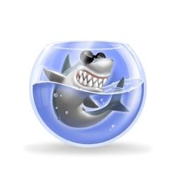 squalo nella boccia