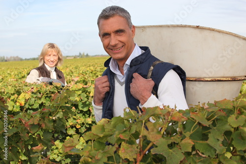 Farmer and wife collecting grapes