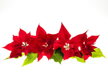 Arrangement with Christmas poinsettias