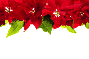 Christmas border with red poinsettias