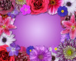 Flower Frame Pink, Purple, Red Flowers