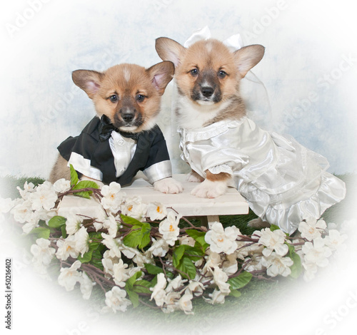 Corgi Puppy Wedding