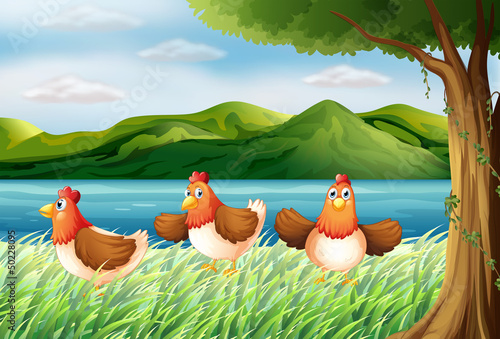 Foto op Canvas Boerderij The three chickens at the riverbank