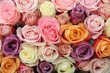 canvas print picture - Mixed pastel roses