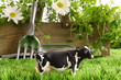 Spring herbs and flowers in the grass with toy cow