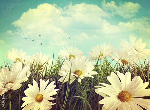 canvas print picture Vintage look of summer daisies in grass