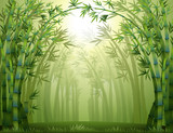 Fototapety A green bamboo forest