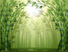 Une forêt de bambou vert