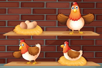 Positions of a hen laying eggs
