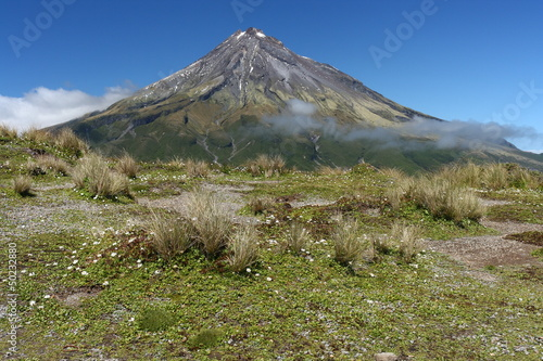 meadow with wildflowers near Mount Taranaki
