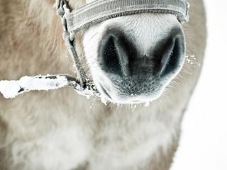 Pferde Detail 77, Nase Nüstern und Maul von vorne, monochrome