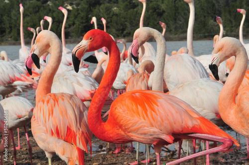 Foto op Aluminium Flamingo Flamingo.