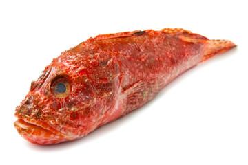 Redfish isolated on white background