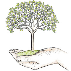 albero in mano
