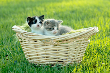 Kittens Outdoors in Natural Light