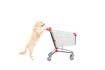 Cute dog pushing an empty shopping cart