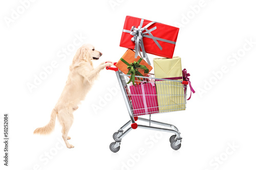Retriever dog pushing a shopping cart full of wrapped presents