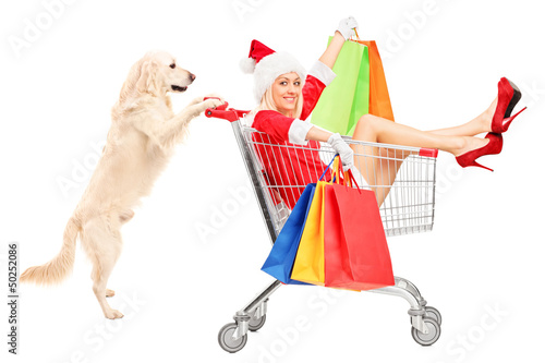 Retriever dog pushing a woman wearing Santa Claus costume in a s