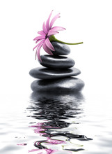 pierres spa zen avec fleur pourpre