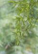 Fototapeten,bambus,pflanze,bambus,ashtray