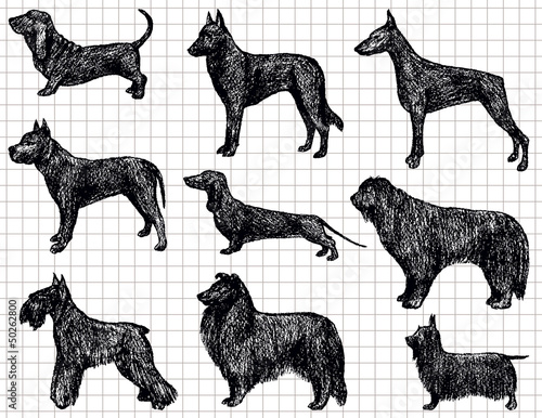 drawing dogs