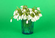 Bouquet of snowdrop flowers in glass vase, on color background
