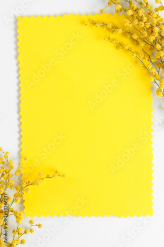 Twigs of mimosa flowers and empty card, isolated on white