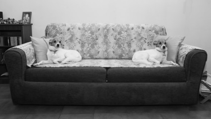 Twins dog B&W image