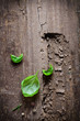 Fresh basil leaves on gouged wood
