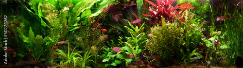 Fotobehang Water planten Decorative Aquarium