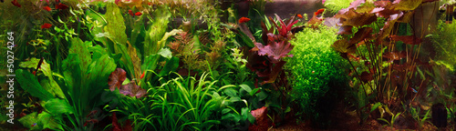 Staande foto Water planten Decorative aquarium