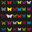 Schmetterling ~ Butterflies ~ Butterfly - Colorful