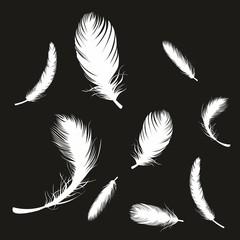 Feder ~ Tierfeder ~ Vogelfeder ~ Daunen ~ Gefieder - Weiß