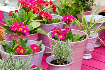 Blumentöpfe auf dem Gartentisch
