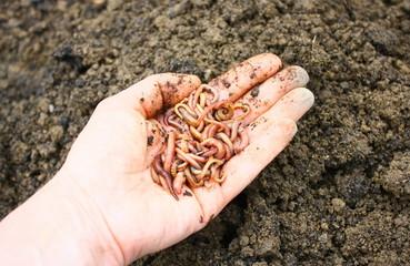tas de lombrics de compost