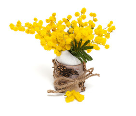 mimosa flowers in decorated egg shell