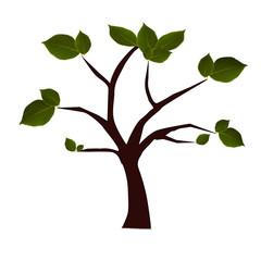 árbol aislado con hojas verdes
