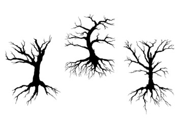Dead trees with stem and roots