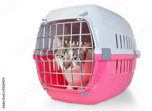 Box with a cat cage for transport. On a white background.