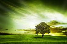 zielony charakter