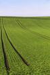 Grüne Felder bis zum Horizont 2