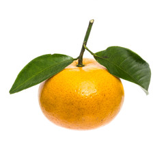 Isolated tangerine orange on white background